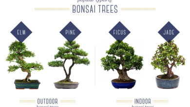 Photo of Bonsai Daily Care