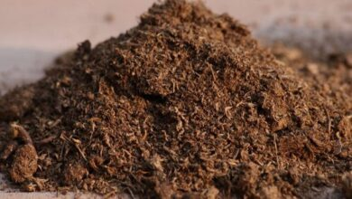Photo of Como Usar Fertilizantes de Refeição Óssea para Plantas