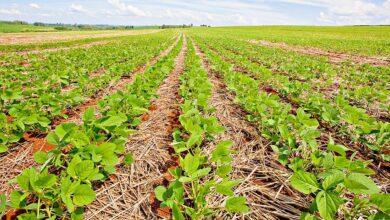 Photo of Controlar e prevenir ervas daninhas