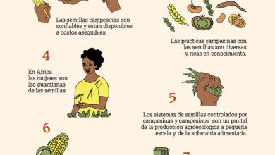 Photo of Culturas de clima fresco: a lista, os métodos de cultivo e como preservá-los
