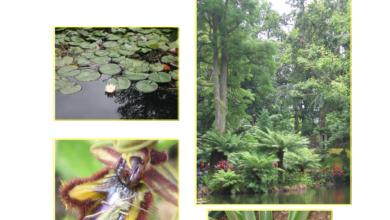 Photo of Daphne gnidium, um arbusto cuja toxicidade o torna impróprio para jardins.