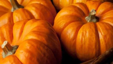 Photo of Dicas para o cultivo de abóboras para o Halloween