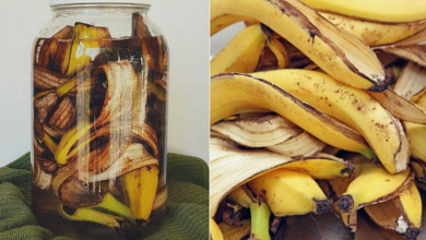 Photo of Fertilizante natural à base de infusões de banana