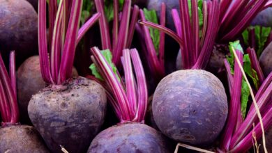 Photo of Growing Beets: A Complete Guide to Planting, Growing and Harvesting Beets