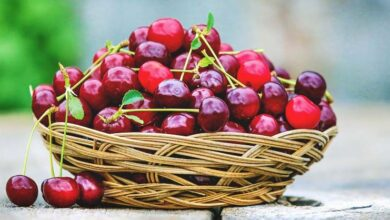 Photo of Growing Cherries: The Complete Guide to Planting, Caring for and Harvesting Cherries