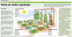 Photo of Growing Chives: The Complete Guide to Planting, Growing and Harvesting Chives (O Guia Completo para Plantar, Cultivar e Colher o Cebolinho)