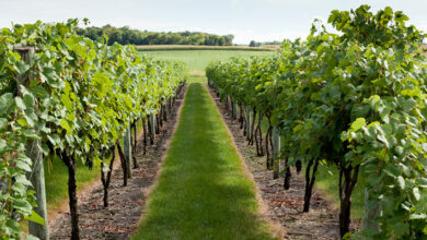 Photo of Growing Grapes: The Complete Guide to Successful Grape Planting and Cultivation