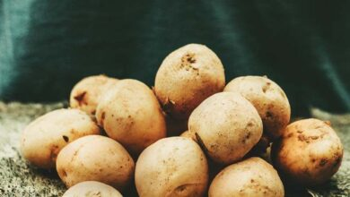 Photo of Growing Potatoes: A Beginner's Guide to Growing Big, Healthy Potatoes