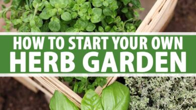 Photo of Growing Potted Herbs: A Guide to Getting Started