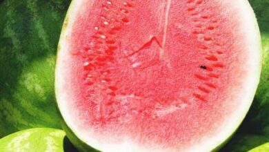 Photo of Growing Watermelon: Your Guide to Planting, Growing and Harvesting Watermelon