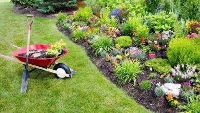 Photo of Manutenção geral do seu jardim de ervas