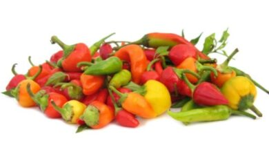 Photo of Pimentos Mulato: Saiba mais sobre os usos e cuidados dos pimentos Mulato