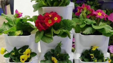 Photo of Plantas para plantadores de varanda