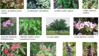 Photo of Plantas que preferem solos alcalinos