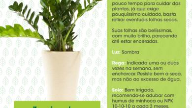 Photo of Regue suas plantas: com que frequência, quando e 10 coisas para saber