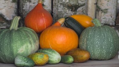Photo of Will Melons meets Pumpkin : Growing Cucurbits Side by Side