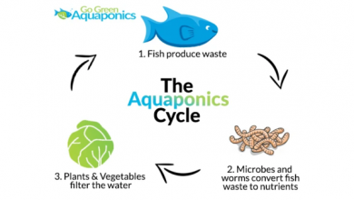 Photo of The Ultimate Aquaponics Beginner's Guide