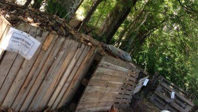 Photo of casa subsidiada compostagem comunitária compostagem todos!