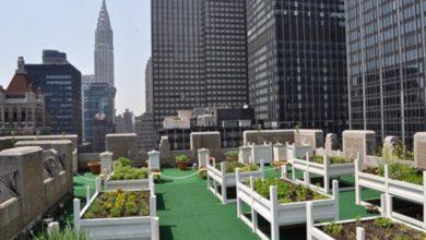 Photo of cultura mesa para o jardim urbano em casa. Tipos de tabelas de cultivo