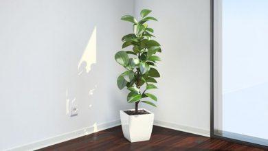 Photo of Árvores de interior