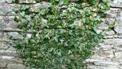 Photo of Crescer a ivy