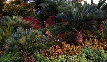 Photo of Cycas