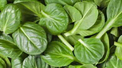 Photo of 14 propriedades nutricionais e benefícios espinafre