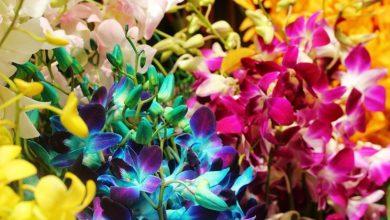 Photo of Fioritura orchidee