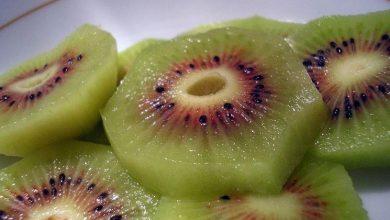 Photo of Cultivo de kiwi