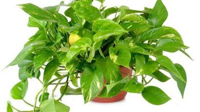 Photo of Plantas de interior