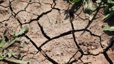 Photo of O estresse hídrico em plantas: Por que minhas plantas secar?