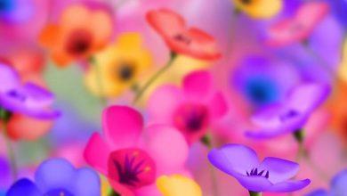 Photo of Símbolos e significados de flores
